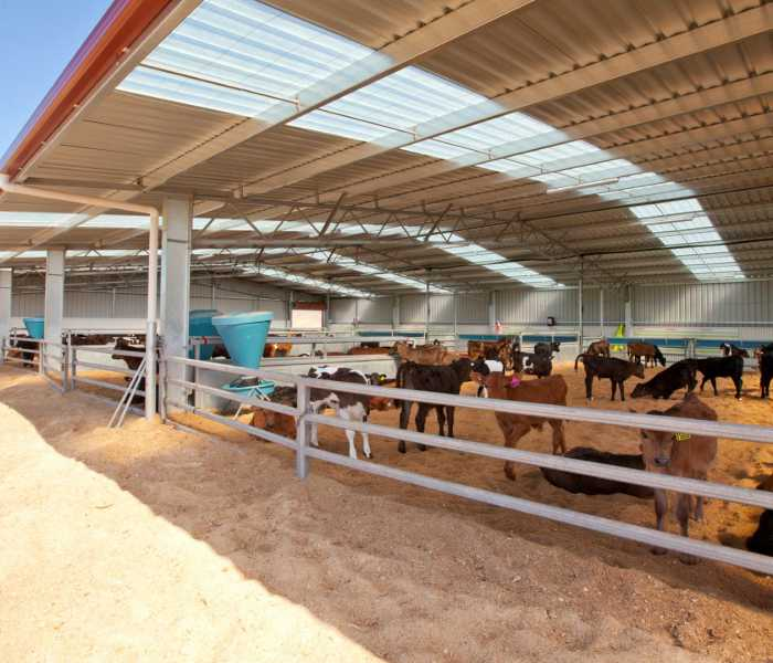 large-calf-shed-front